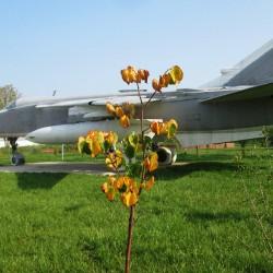 31-AVG-3.th.jpg